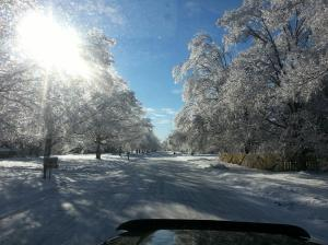 View on our street.  Quite pretty, if you're looking at it from inside a warm house.